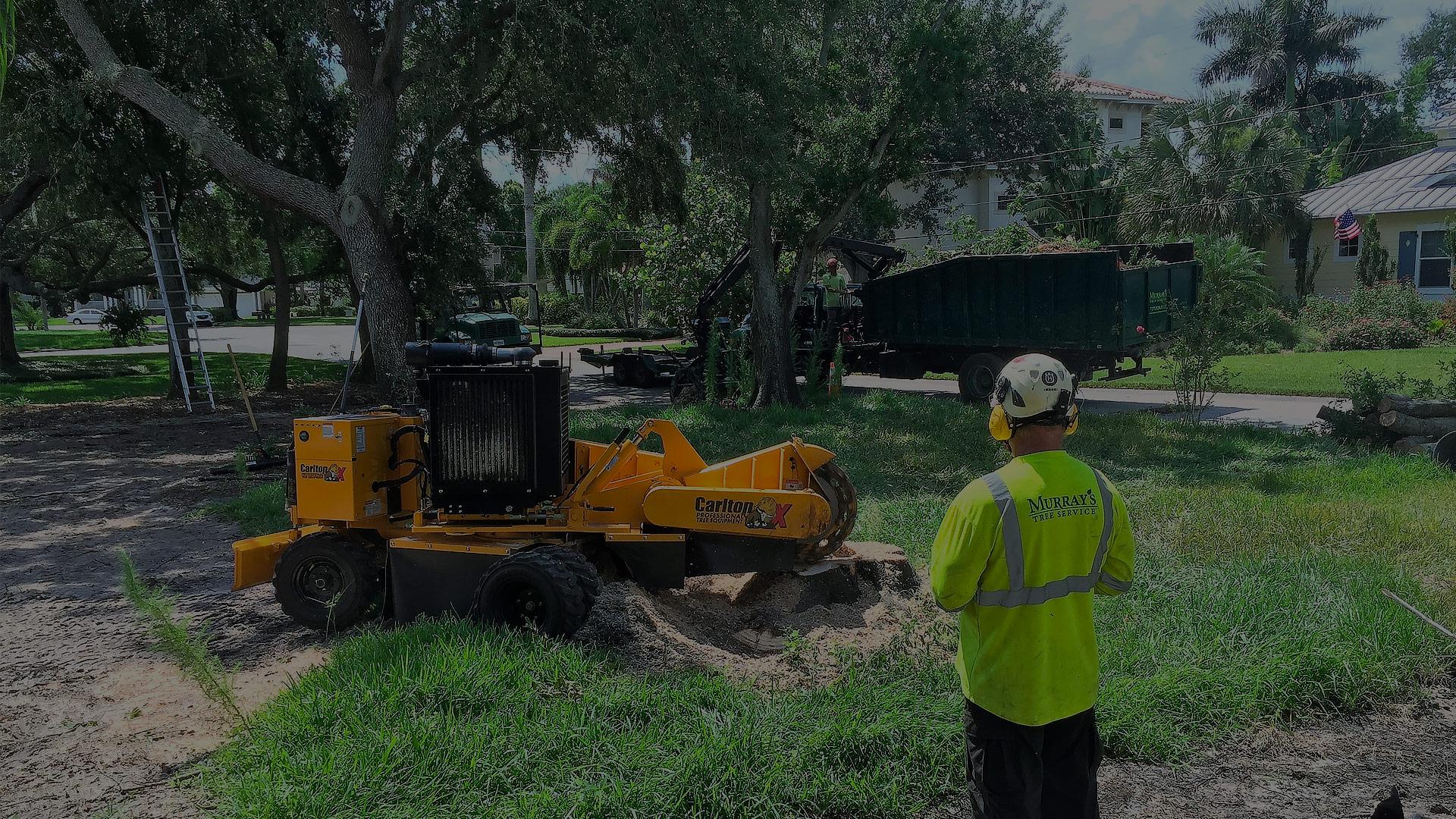 Tampa Tree Trimming